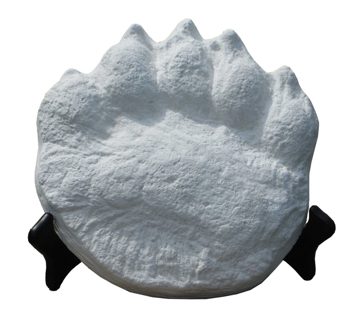 Polar Bear Cast