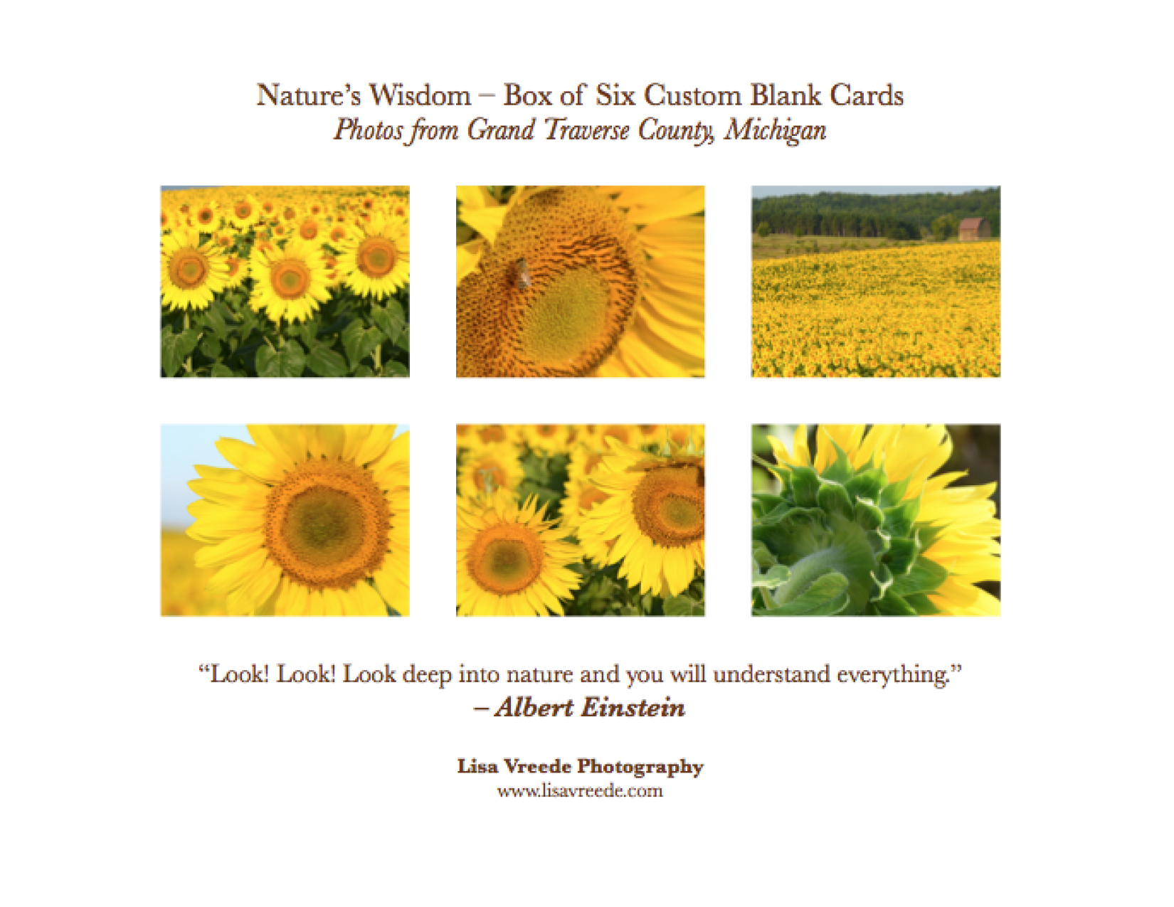 Sunflower Images Notecards