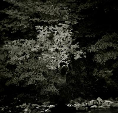 Raluca Caragea | The Soul Of A Tree