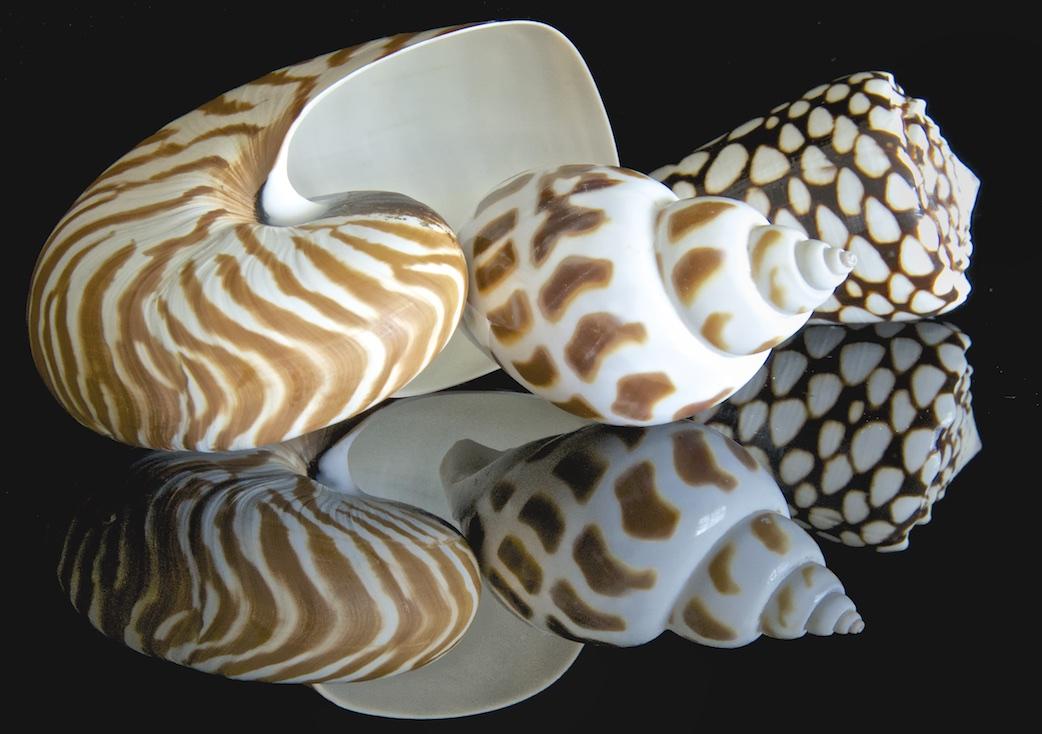 Shellscapes  VI