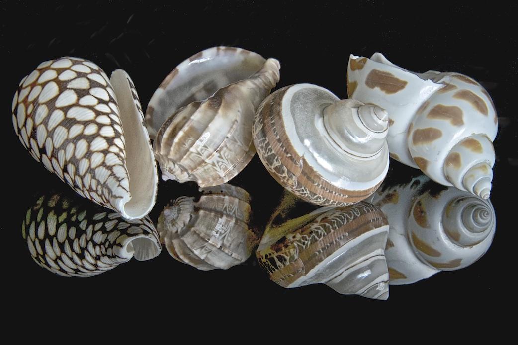 Shellscapes IX