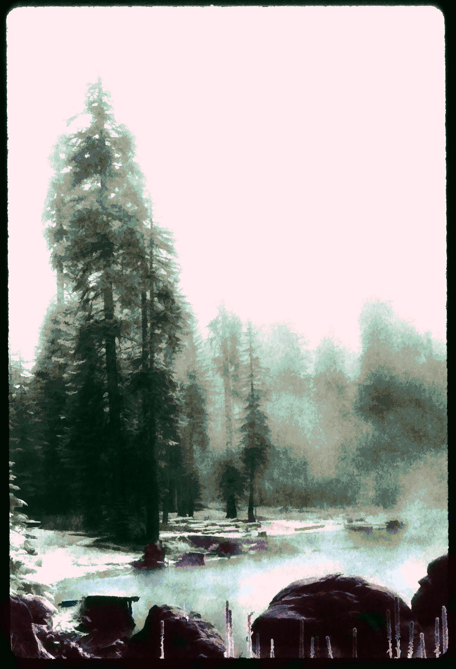 Sequoia I by Merzan