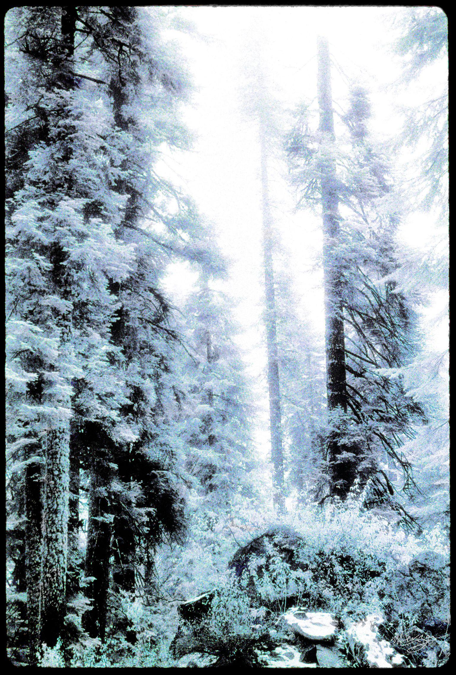 Sequoia II by Merzan