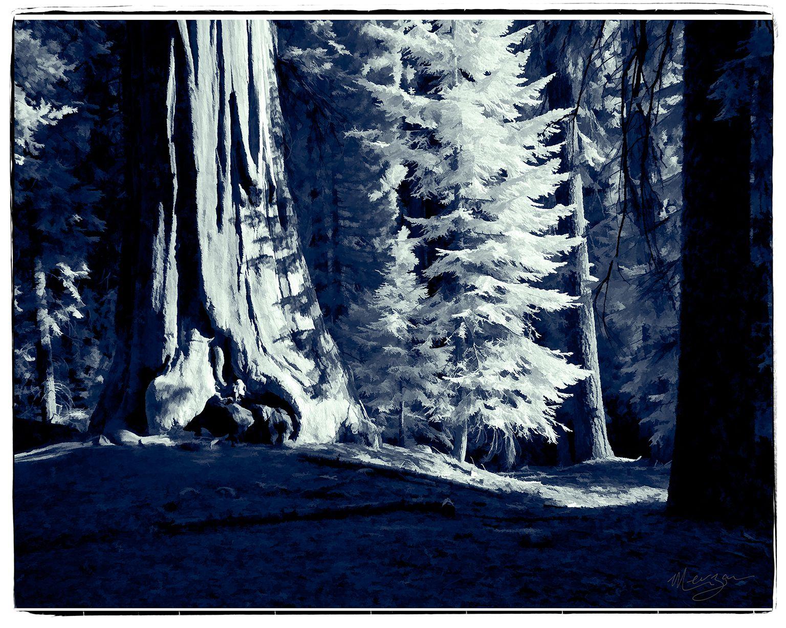 Redwood Forest Floor by Merzan
