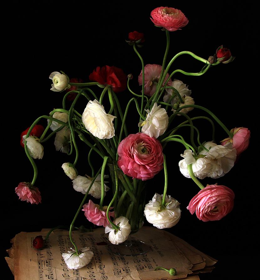Still Life 1, Music & Ranunculus