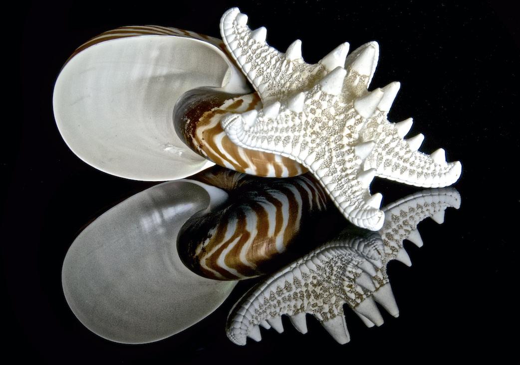 Shellscapes   II