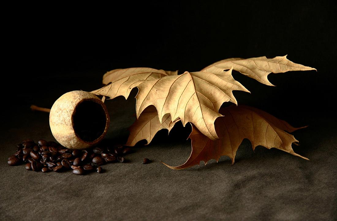 Still Life 1, Poppy Shell & Coffee Beans