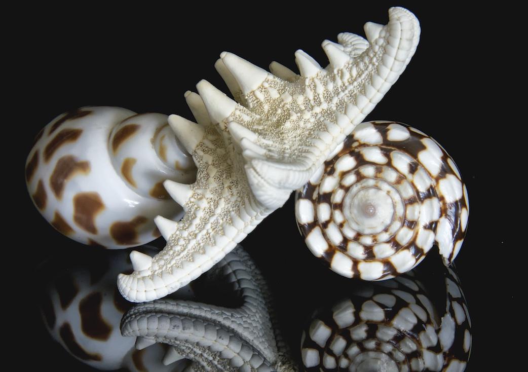 Shellscapes   III