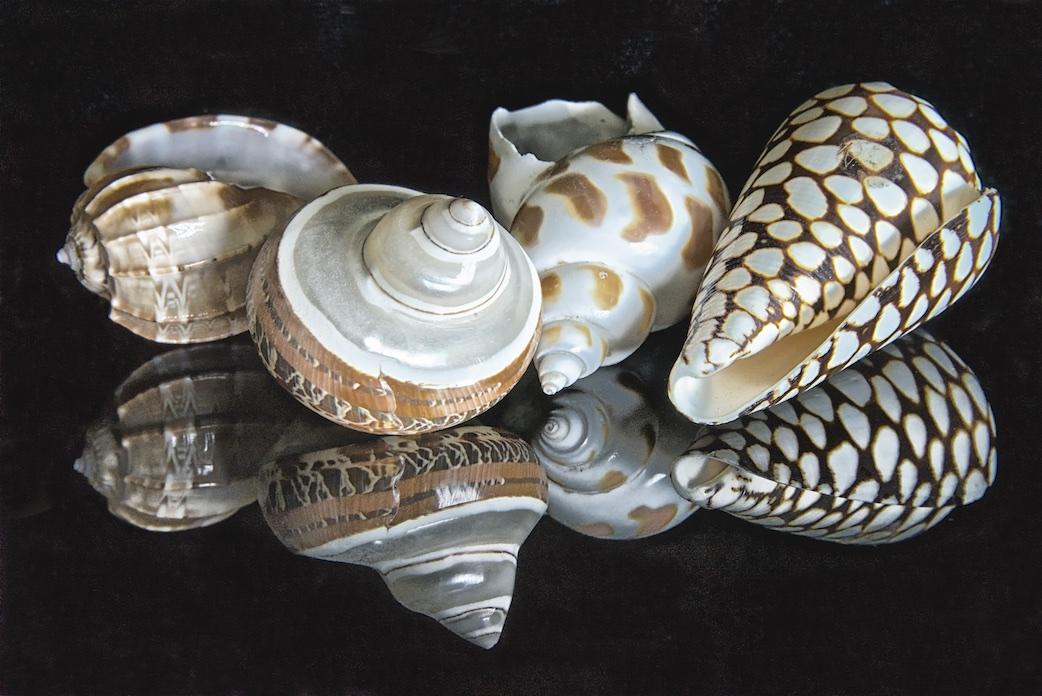Shellscapes  VIII