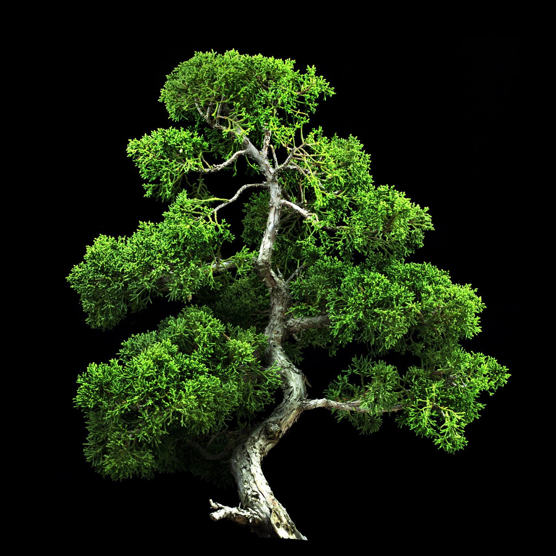 Javiera Estrada | THE GIVING TREE