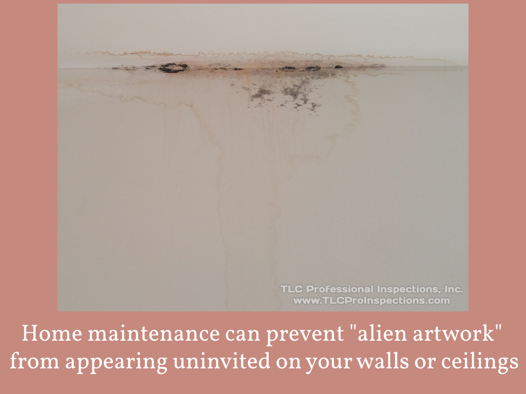 Home maintenance can prevent mold