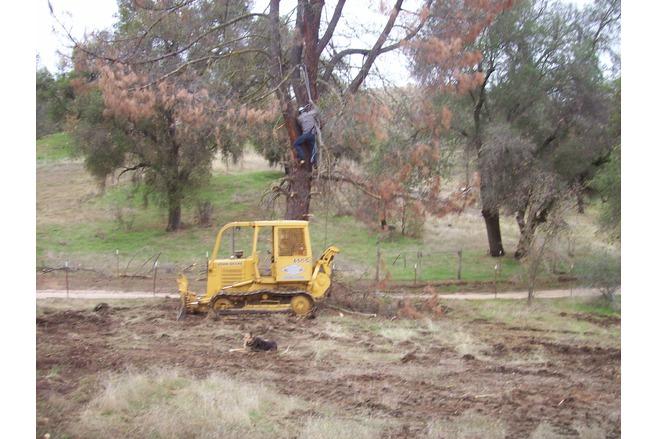 dead trees, tree clearing, creston california