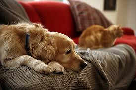 """Reverse Pet Sitting"""