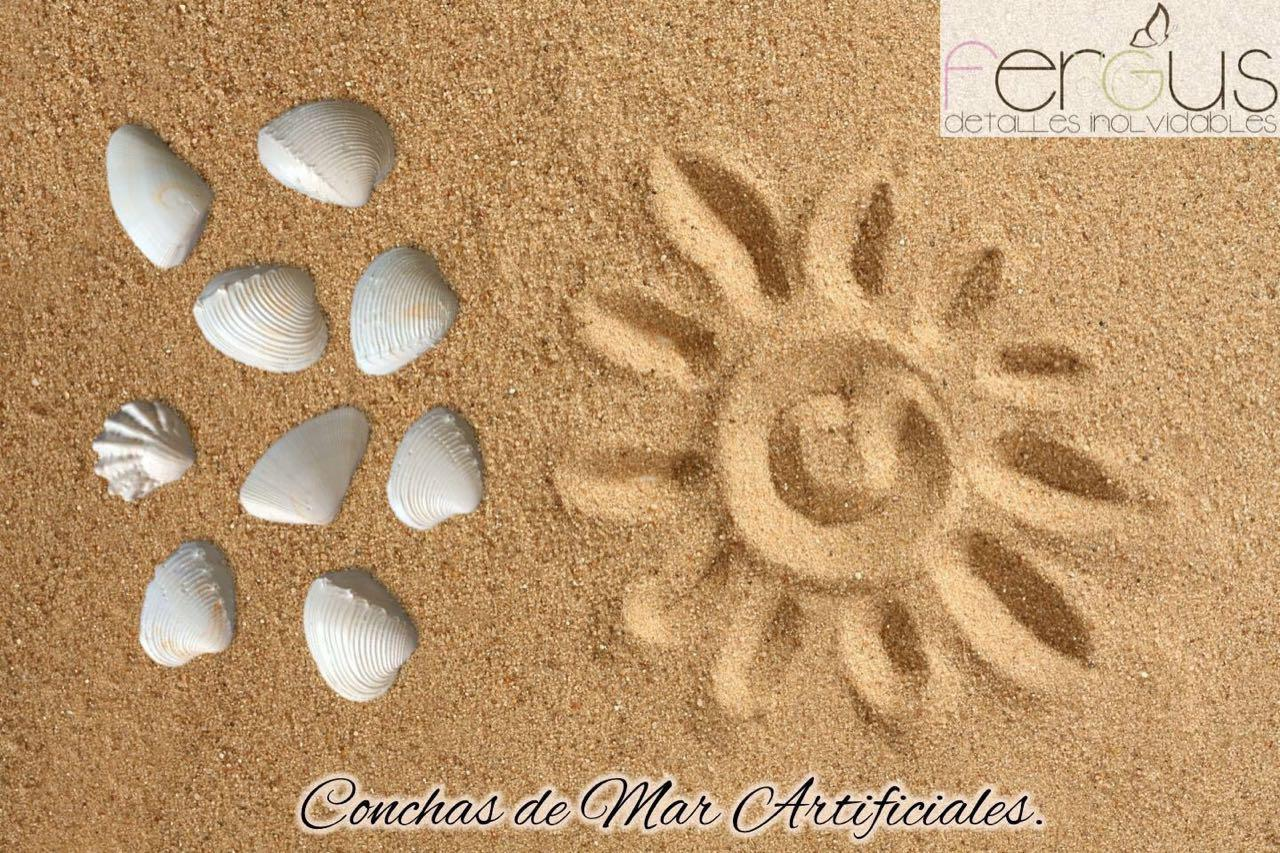 Fergusdetalles Conchas De Mar - Fotos-de-conchas-de-mar