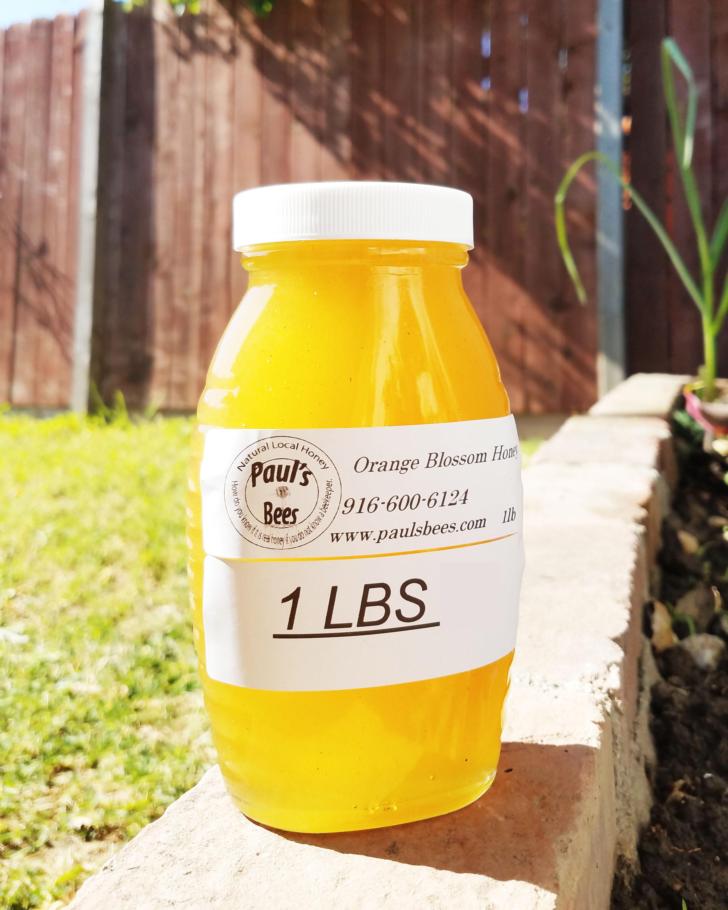 Orange Blossom Honey 1 lb