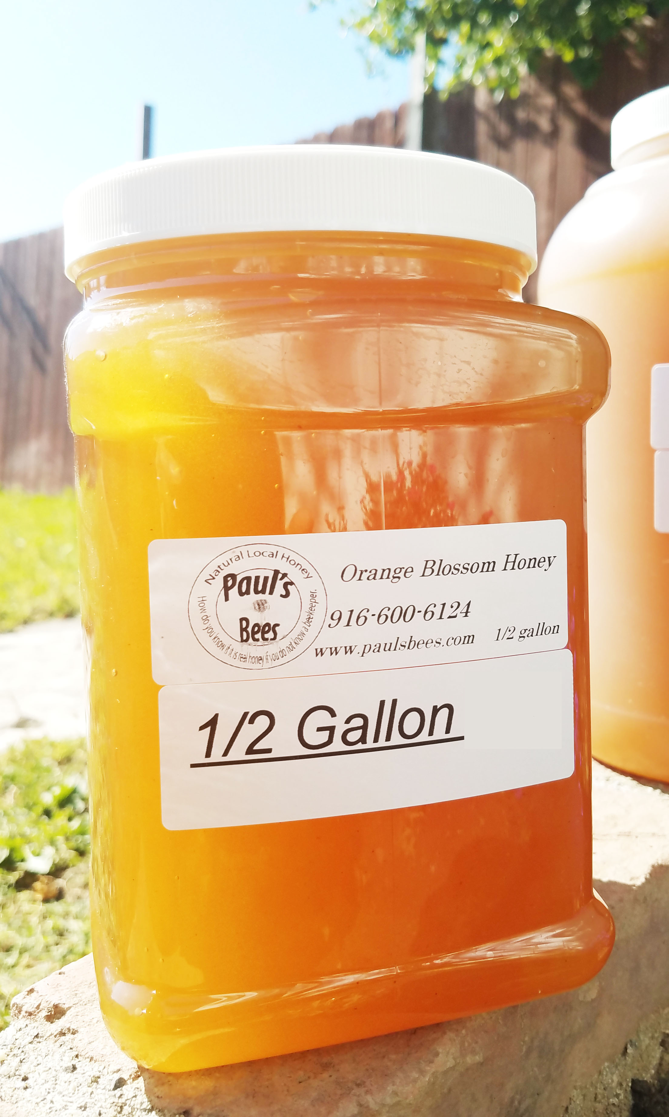 Orange Blossom Honey 1/2 gallon