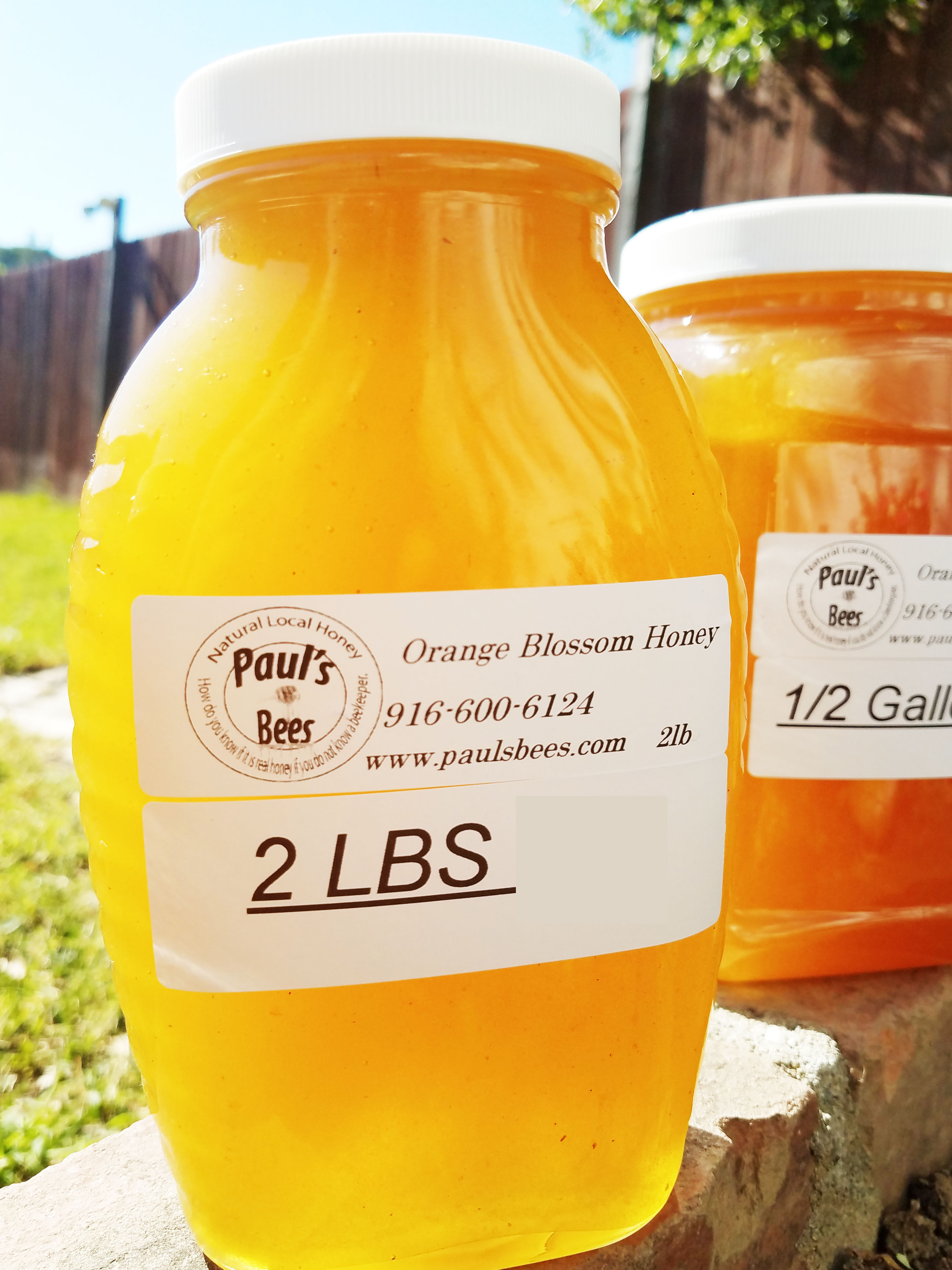 Orange Blossom Honey 2 lb