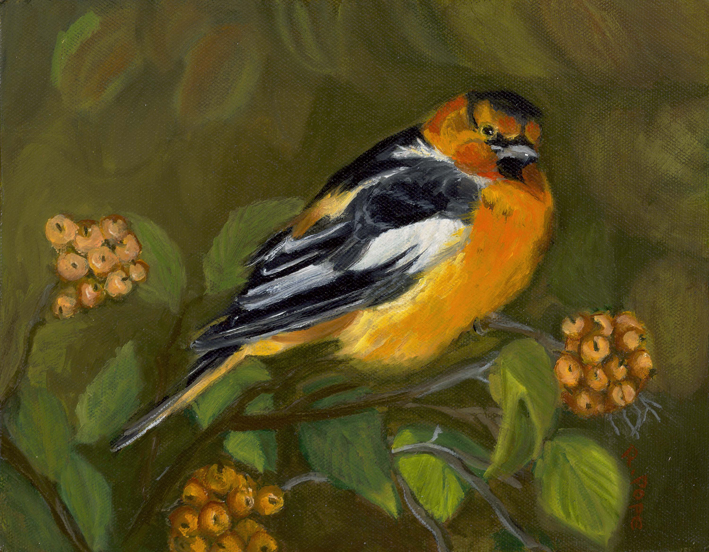 Baltimore Oriole/Original Oil  $ 85.00