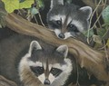 Raccoons/Original Oil      $375