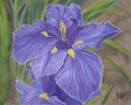 Japanese Iris/Original Oil    $375