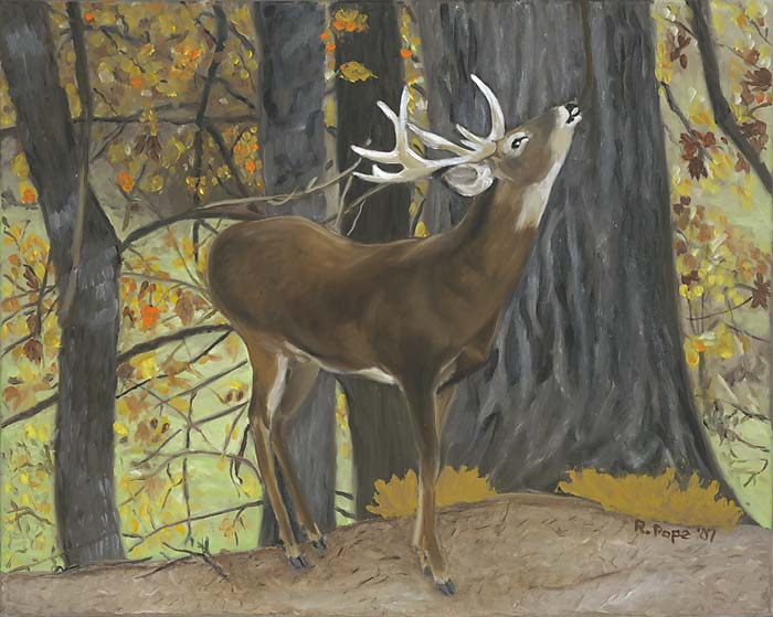 Deer/Original Oil     $375