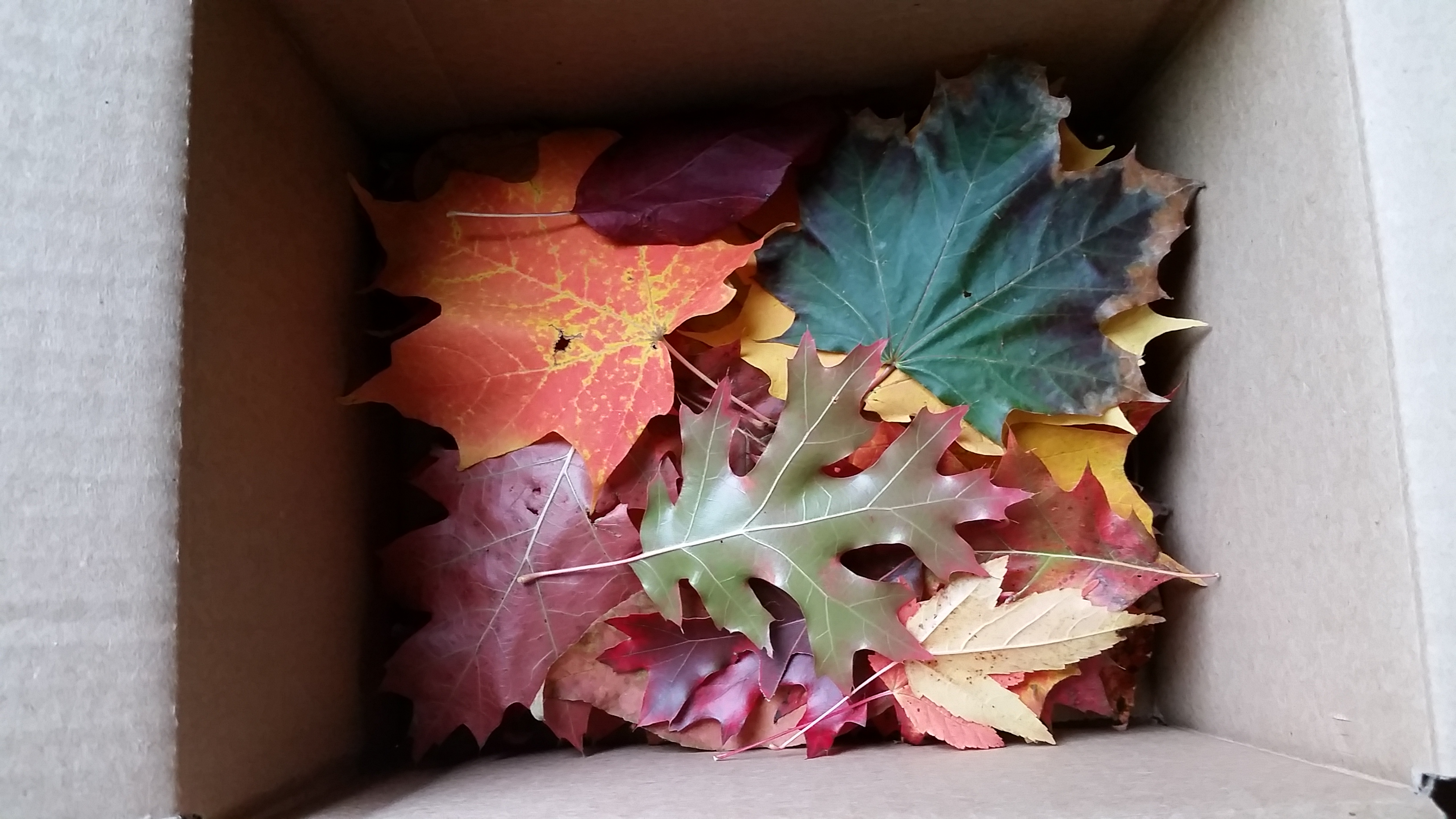 the box of leaves