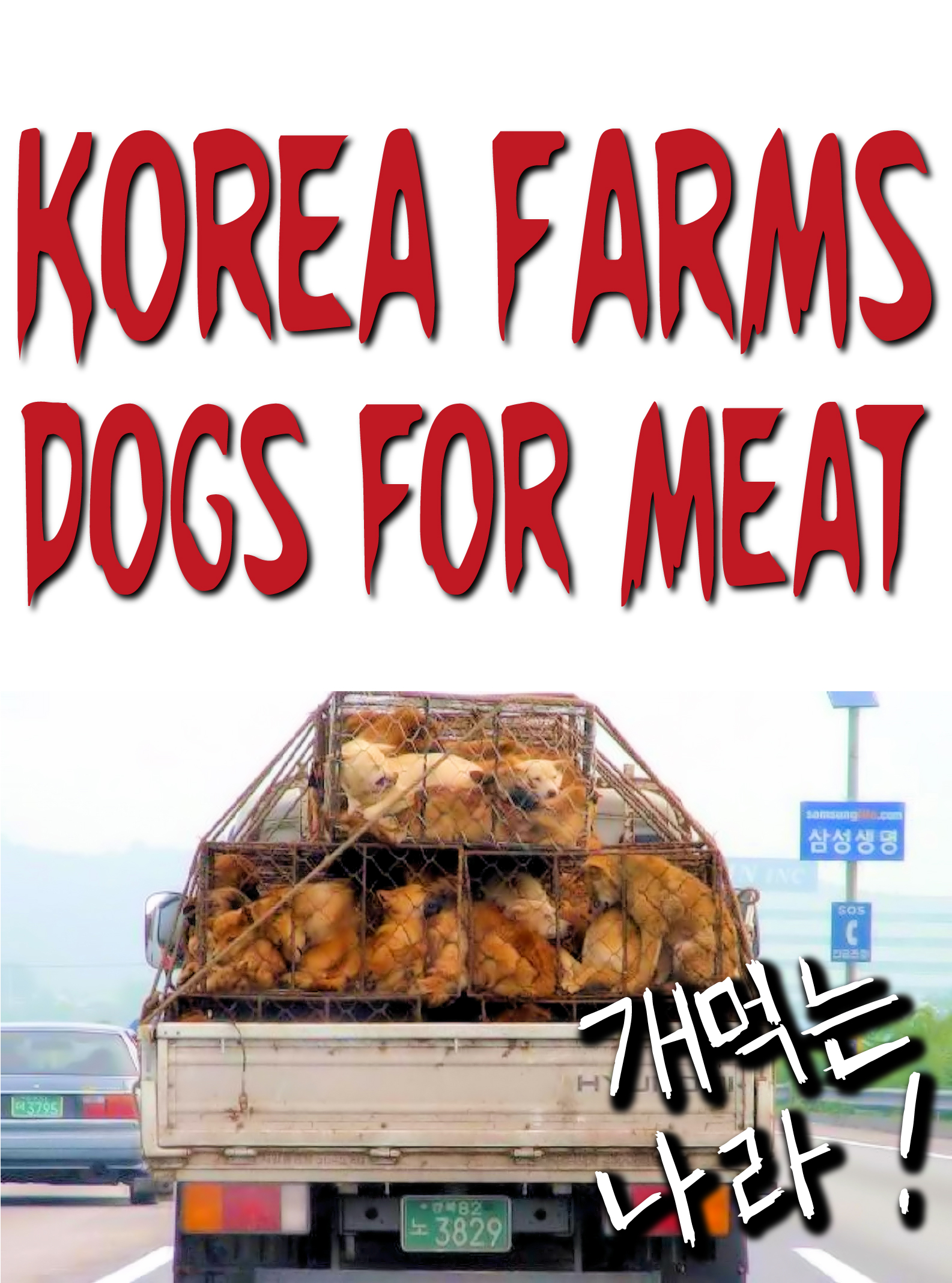 International sales: Korea Farms Dogs Protest Sign